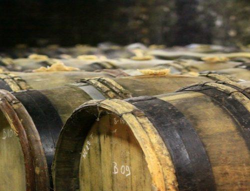 Déguster les vins du Jura dans nos gîtes de groupe !